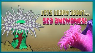 Lets Learn About... Sea Anemones | Bouncy Bounce Kids