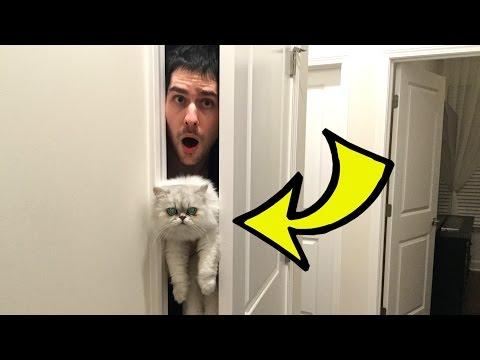 HIDE THE CAT CHALLENGE!!!