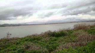 児島湖は大荒れでした。少し雨がやんだのでチョコの散歩です。 ツバメが...