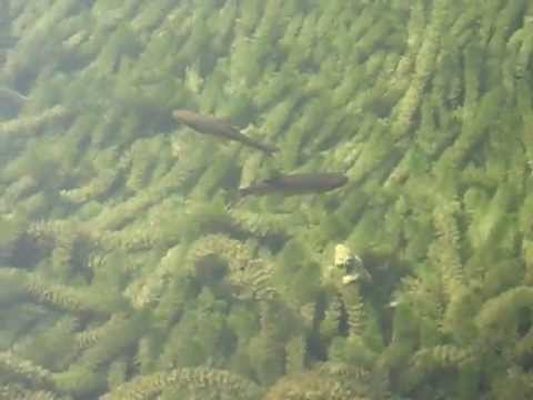 Little Fishies at Plitvice National Park, Croatia