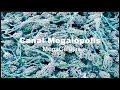 MICROORGANISMOS (Los Hongos)