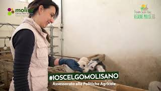 video #ioscelgomolisano