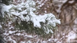 Песенка про зиму - Уральские пельмени