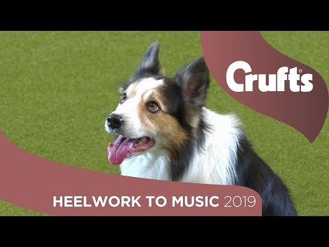Can your dog do this? Heelwork To Music Part 1 | Crufts 2019