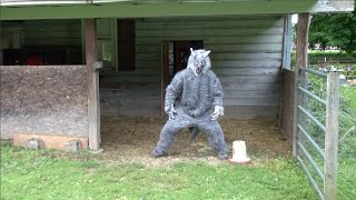 WOLFMAN CAUGHT ON VIDEO