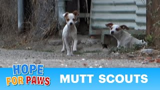 Mom, dad and puppies abandoned in an ally... this was a tricky rescue.