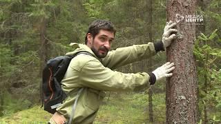 Орнитолог из Череповца прошёл обучение во Франции