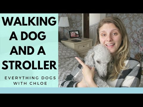 HOW TO WALK DOG WITH STROLLER 5 TIPS AND TRICKS FOR YOU