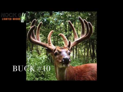 Whitetail Deer Scoring and Aging from Trail Camera Pictures