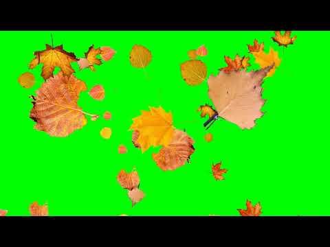 Футаж - осенние листья вариант 2 хромакей | Footage-autumn leaves option 2 chromakey