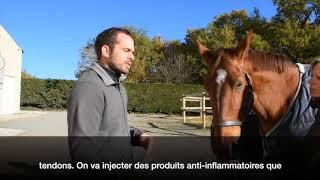 Lésion du ligament suspenseur du boulet Clinique équine de Conques interview Cheval partenaire