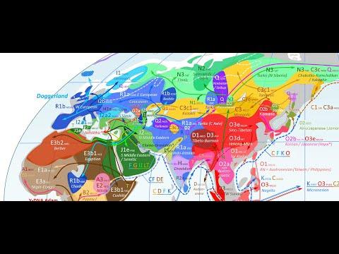 Haplogroup E Y Dna And North African Genetics Doovi