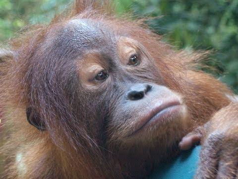 Die letzten Wälder Sumatras - Ein Interview mit Peter Pratje, ZGF