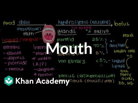 Mouth | Gastrointestinal system physiology | NCLEX-RN | Khan Academy