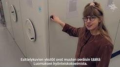 Suomen hyönteislahkojen tunnistusopas