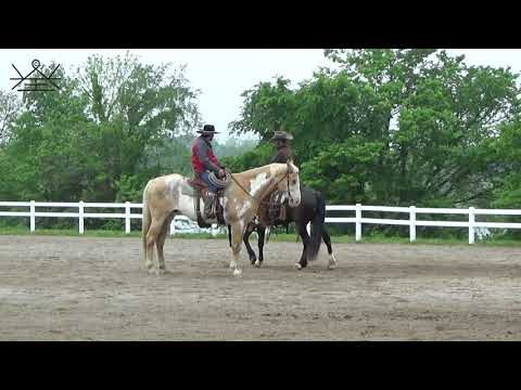 How to refine and be more particular with your horse while being fair | Horsemanship Principles
