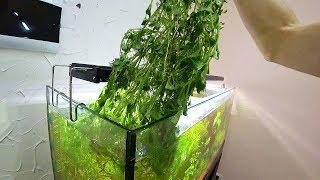Прополка растений в аквариуме