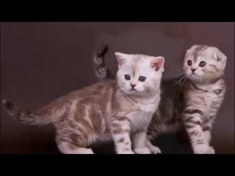 Клички для шотландских котят Правила выбора  Часть 2  Имена для котят мальчиков Names for cats