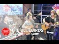 The BlueBirds - Nothing On Me live @ Roodshow Late Night