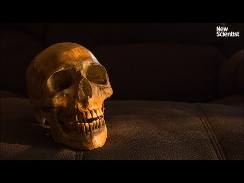Hundreds of human skulls have been sold on eBay