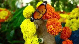 Парк бабочек в Дубае.(Очень красивый с настоящей зеленью парк бабочек., 2016-02-25T07:18:11.000Z)