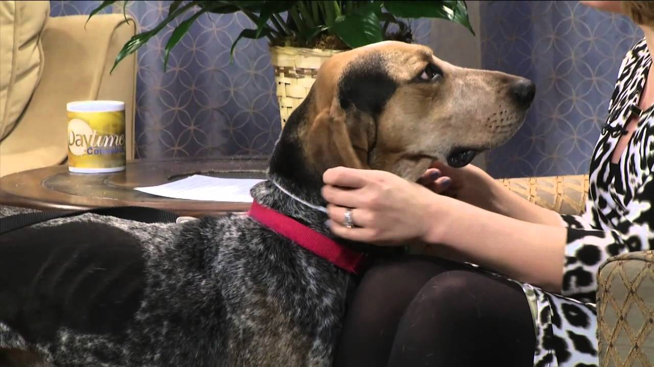 Find A Friend 03 04 15 With Humane Society Of Delaware County Youtube