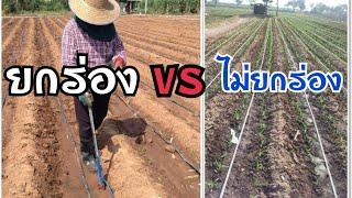 ปลูกข้าวโพดแบบยกร่อง vs แบบไม่ยกร่อง อันไหนดีกว่า? สวนลุงเฉลิมพีรี | ป้อมซังเกษตรสร้างชีวิต