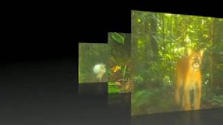 Trap Camera in the Yasuni