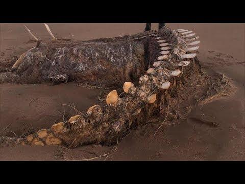 Скелет Загадочного Существа Ураган Вынес наБерег