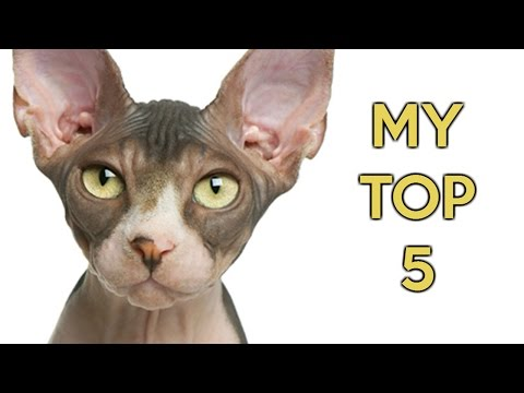 Top 5 cutest cats compilation - best cat breeds ever.