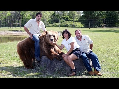 Family Live With 13 Bears In Their Backyard