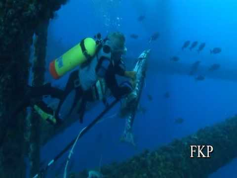 Offshore oil platforms are artificial reefs - Fish love it