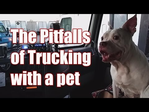 Taking a Pet Trucking Over The Road