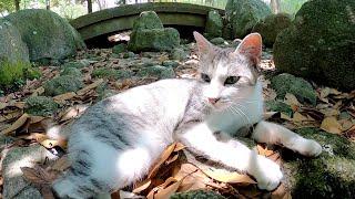 美しいサバシロ猫がゴツゴツした岩場でくつろぐ