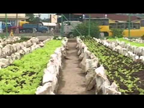 Cuba's Green Revolution Part 1