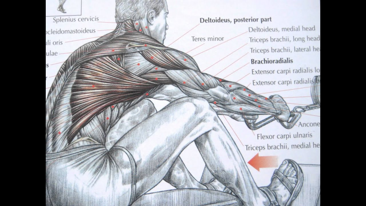 Bodybuilding back exercises and anatomy - YouTube