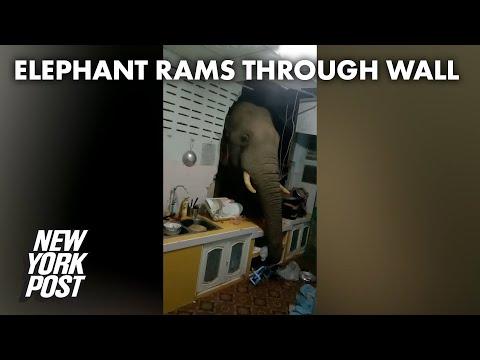 Elephant rams through kitchen wall to swipe Thai family's food | New York Post