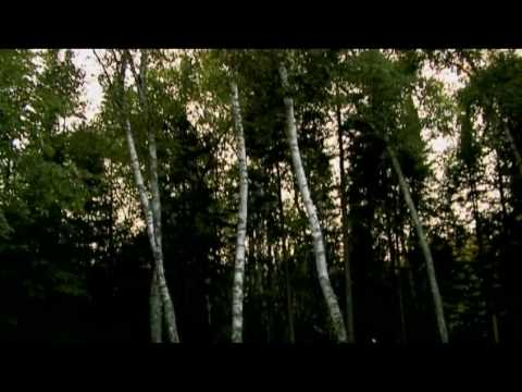 "Bowerbirds - ""Northern Lights"" Dead Oceans"