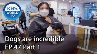 Dogs are incredible | 개는 훌륭하다 EP.47 Part 1 [SUB : ENG/2020.10.14]
