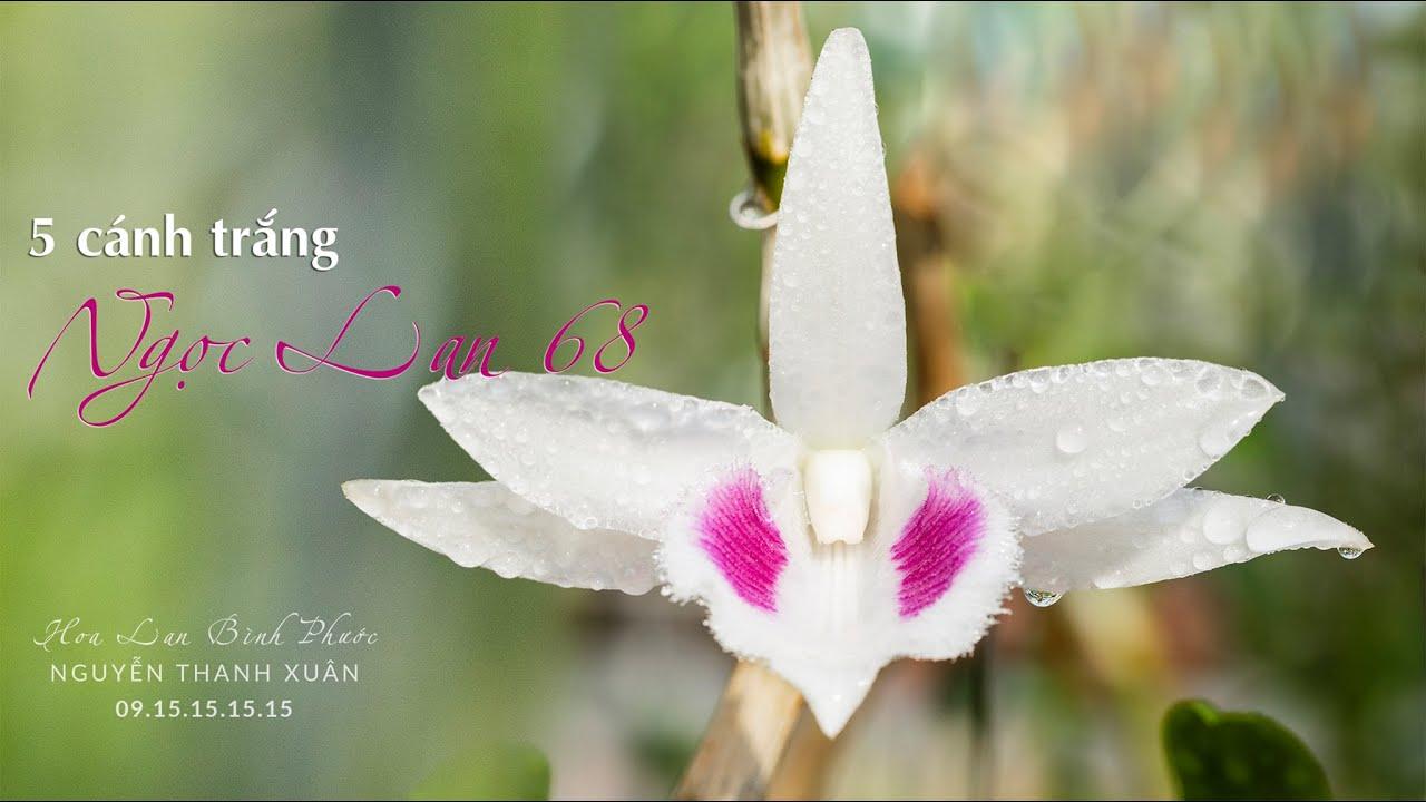 4K –  5 cánh trắng Ngọc Lan 68 | Hoa Lan Bình Phước