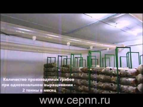 УМДИС: рынок грибов Украины -