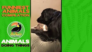 CAT ATTACK! | CUTE Cat & Dog Videos | Funny Animal Videos | ANIMALS DOING THINGS
