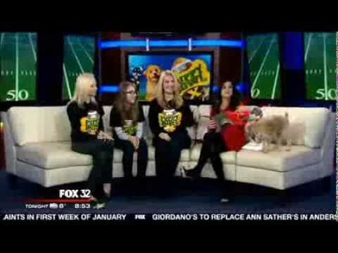 ROMP's Italian Greyhound Sharpie - Animal Planet Puppy Bowl X - Fox News Chicago Segment