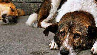 Ветеринары топором отрубили голову собаке вместо того, чтобы усыпить