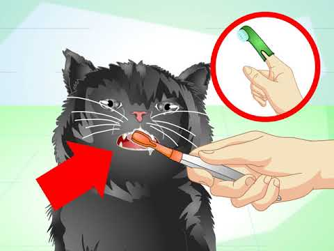 How To Get Rid Of Bad Cat Breath