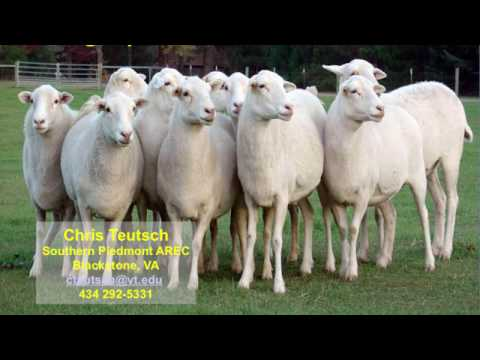 Grazing Systems for Small Ruminants-Chris Teutsch