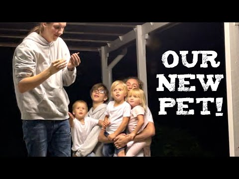 KIDS COME HOME! Our AUSTRALIAN Pet! / MOM OF 10