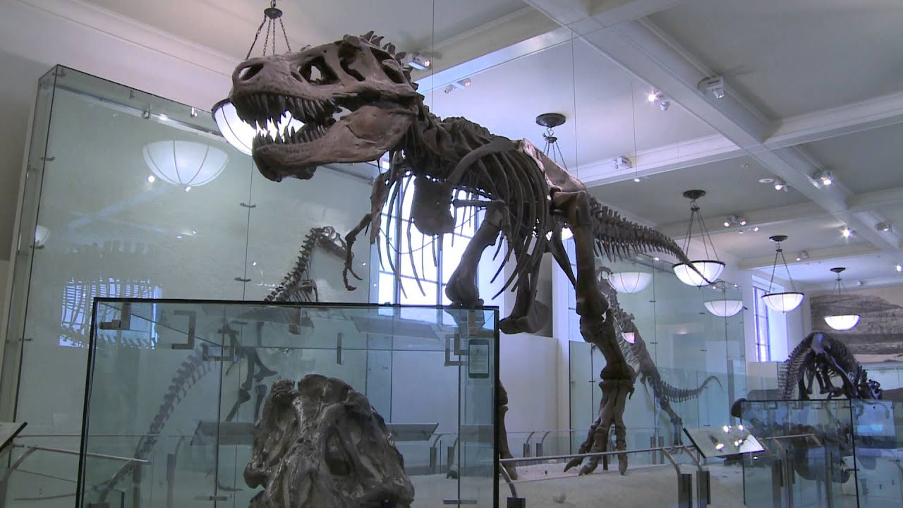 How fast did dinosaurs grow, and how long did they live?