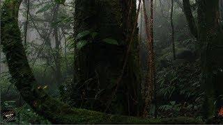 Chuyện tâm linh có thật - Những chuyện rùng rợn về khu rừng cấm ở Lào Cai