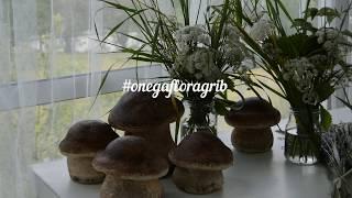 Гриб из бетона от  Onega Flora & Kuriosa